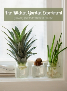 The Kitchen Garden  Experiment From Food Scraps